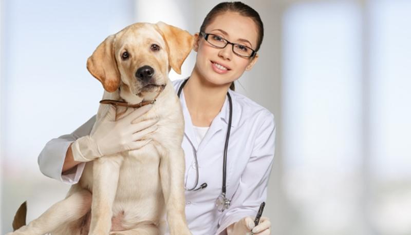 Proteja seu cãozinho da Displasia Coxofemoral