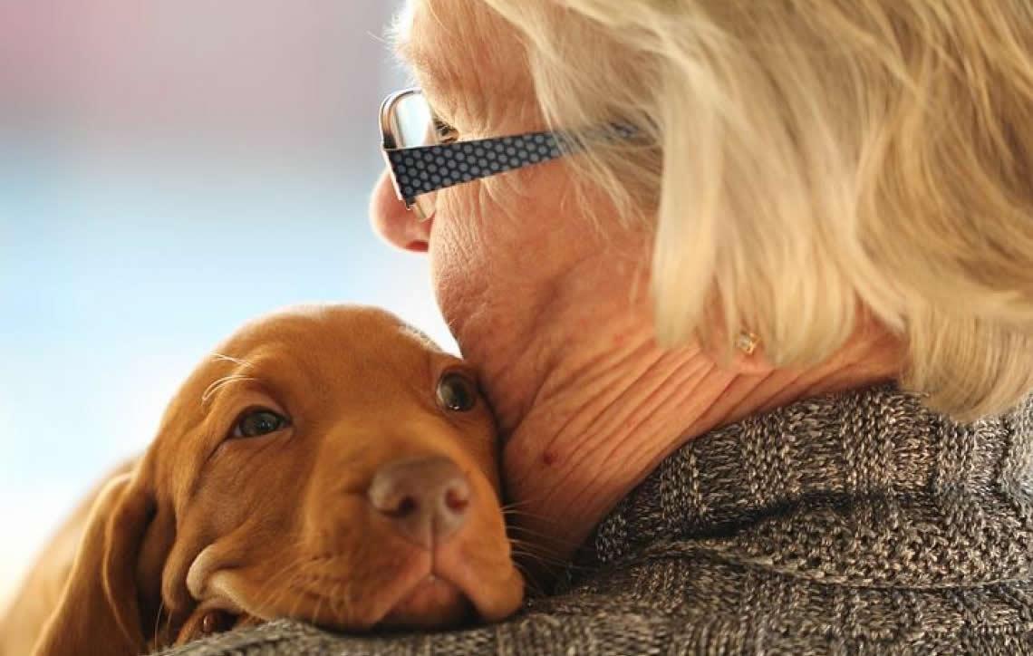 A importância do check up em animais idosos