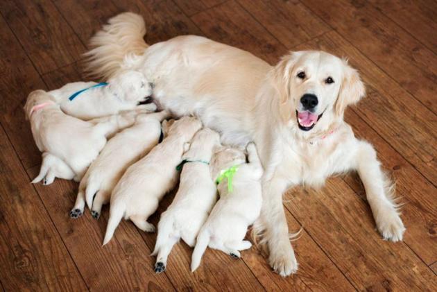 A importância do exame ultrassonográfico na gestação de cães e gatos