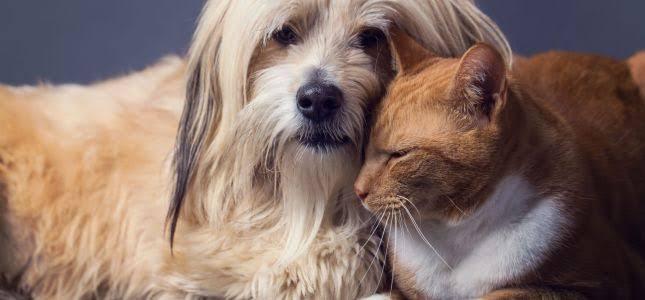 Novembro Azul: A importância do exame preventivo em cães e gatos