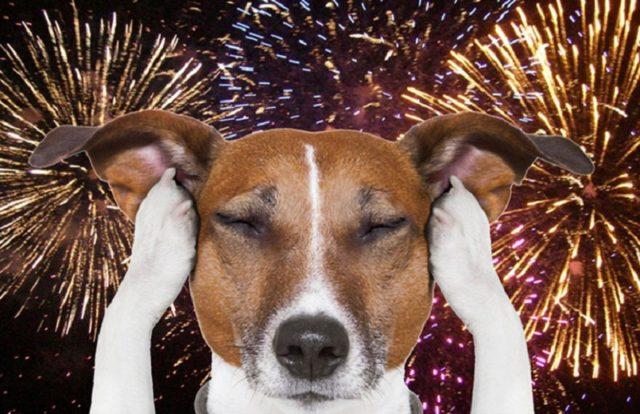 Cuidados com os pets na temporada de fogos de artifícios
