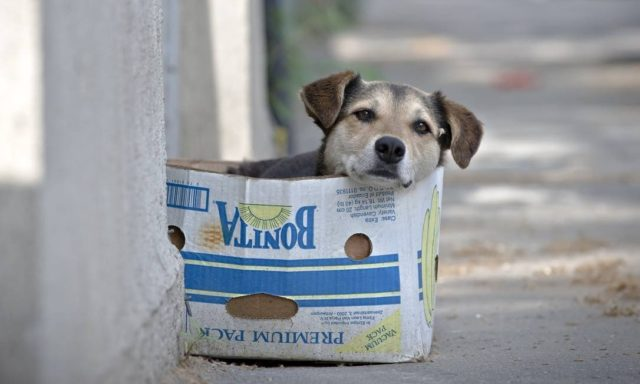 Adotei um pet de rua, o que fazer agora?