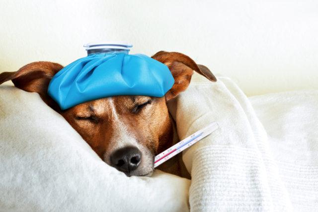 As urolitíases estão entre as principais afecções que acometem o trato urinário de cães e gatos!