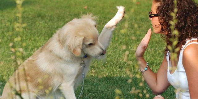 Adestramento de cães ao estilo: faça você mesmo