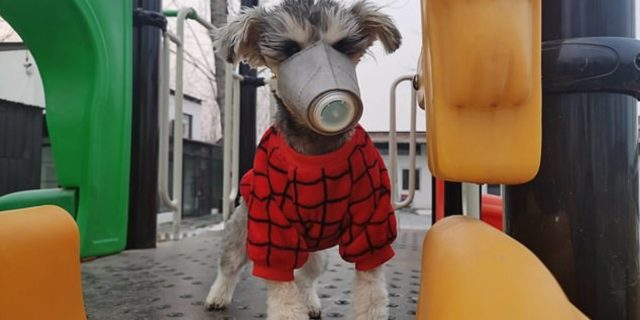 Dicas veterinárias: Cachorros podem pegar o coronavírus?