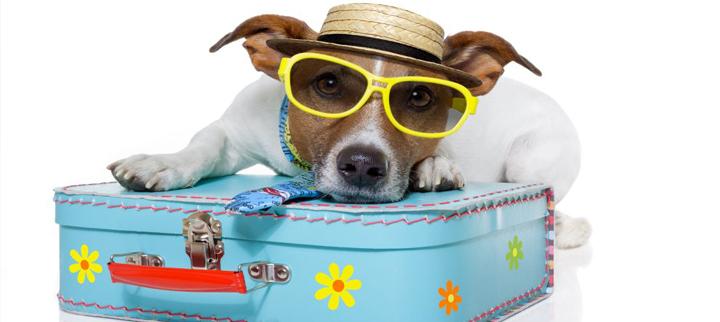 Como viajar com seus pets?