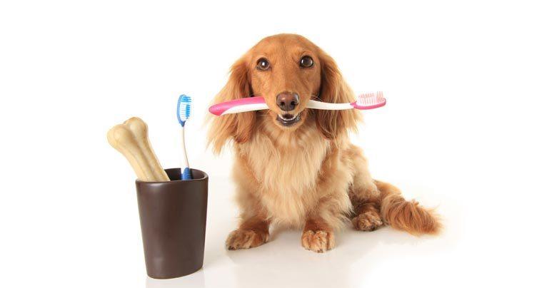 Cães e gatos precisam escovar os dentes ?