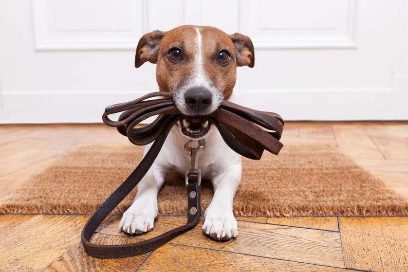 Como criar e cuidar de seu pet em apartamento